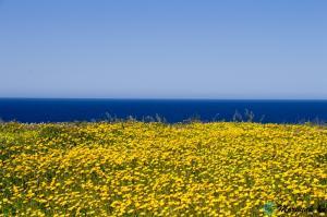 malta_victoria_lines10